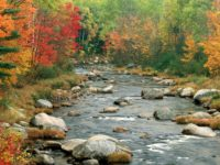 autumn-river-trees---free